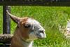 DSC_9614 (Costi Jacky) Tags: france naturereserve parcdemerlet