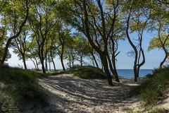 (klgfinn) Tags: autumn balticsea forest grass landscape sand sea shore sky skyline tree water wood