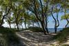 На берегу (klgfinn) Tags: autumn balticsea forest grass landscape sand sea shore sky skyline tree water wood балтийскоеморе берег вода горизонт дерево лес море небо осень пейзаж песок трава