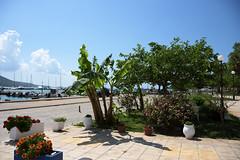 Plataria, Greece (Vojinovic_Marko) Tags: plant nikon d7200 grka greece hellas plataria   sea ioniansea jonskomore town epirus flowers tree