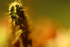 pontiagudarse (andrelvas) Tags: cactus plants flower garden mini worlds mundos babi suculent suculentas vieira minimundos babivieira