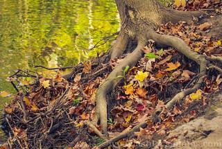 Wilket Creek Tree