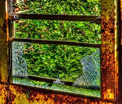 School Bus Window (bobbybaby01) Tags: trees bus window glass rust scrapyard hdr olympuscamera