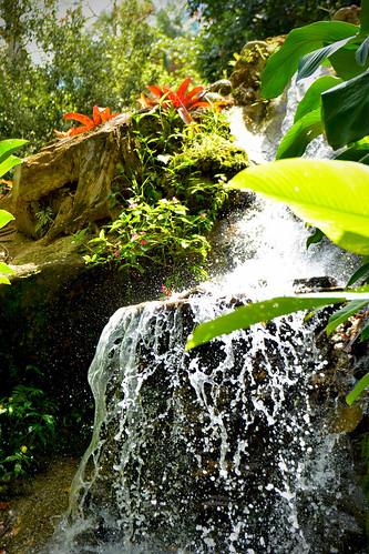 Jardim Botânico do Rio de Janeiro 05