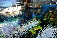 Aquarium of the Pacific Behind the Scenes 1 (Joe Lach) Tags: california fish color beach water long tour behindthescenes aquariumofthepacific behindthescene longbeachaquarium lookingfromabove joelach