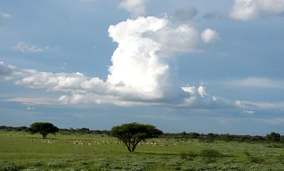 Botswana Hunting Safari 26