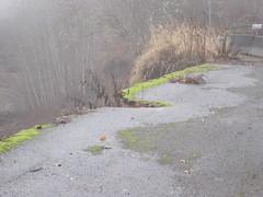 SR 542 eastbound shoulder (WSDOT) Tags: baker mountbaker mtbaker jf nooksackriver wsdot maplefalls sr542 mountbakerhighway glaciersprings