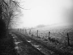 Chemin un matin d'hiver (steph20_2) Tags: b winter white black monochrome lumix countryside noir noiretblanc hiver ngc mo panasonic g5 20mm campagne blanc brouillard lu brume bru picardie oise m43 skanchelli