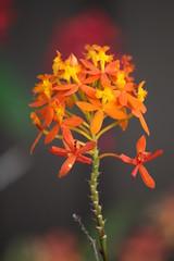 (sabinakurt_photo) Tags: flowers orange plant green nature yellow canon garden spring flora sydney australia