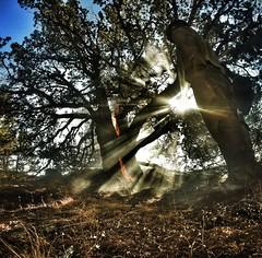 Deer hunting near blacks creek. (ff13bravo) Tags: treeonfire wildlandfirefighter oregonfire desertfire