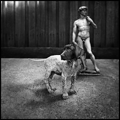 Jager (Jolyon James) Tags: blackandwhite dog animals statue penis malenude germanshorthairedpointer statueofdavid