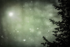 snowing (irina_escoffery) Tags:
