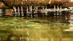 Jambes de gouttes (Et si, et si ...) Tags: eau hiver gel froid gouttes