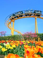 roller coaster (akashirokiiro) Tags: flower japan bluesky tulip aomori hachinohe amusementpark rollercoaster       xperia