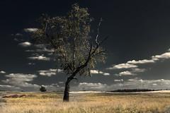 National Park De Hoge Veluwe (ed mather) Tags: nature netherlands landscape veluwe landschap