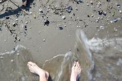Beach details /2 (Fede.Caps) Tags: sea italy beach italia mare emilia dettagli spiaggia lido conchiglie romagna