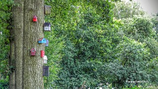 Bird Apartments, Achterveld, Netherlands - 2717