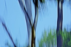 Lyrical Abstraction - ICM / Intentional camera movement (eggii) Tags: trees forest icm intentionalcameramovement