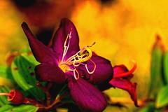 COLOURS ssssss !!! (Rajavelu1) Tags: flowers colours red sdof bokeh plant green art artland creative canon60d macrophotograph kerala india ef100mmf28macroisusm