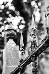 Protection (Marco Abud) Tags: sky tree nature rust gate dof porto steel natureza rusty bio grade cu depthoffield santos vida streetphoto rvore litoral ferrugem profundidadedecampo montanhas rvores bertioga biologia biome javelin rustygate proteo abud enferrujado baixadasantista fotografiaderua lana lanas bertiogasp bioma cidadelitoranea estnciabalneria marcoabudfotografia marcoabud abudfotografia portoenferrujado bertiogasantos microrregiodesantos municpiodeestnciabalneriabertioga