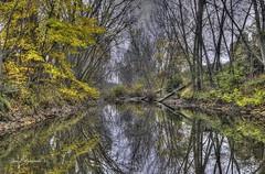 Reflejo Bayas (Jos E.Egurrola/www.metalcry.com) Tags: november tree rio arboles noviembre explore bosque reflejo otoo es hdr autumm 2014 baias bayas mirandadeebro otoal noviembre2014