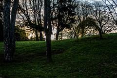 DSC_7362-2 (arnauddjf) Tags: paris arbre parc butteschaumont matin chaumont buttes 19me