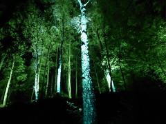 Enchanted Forest (IrenicRhonda) Tags: public forest geotagged scotland october unitedkingdom escocia done enchantedforest pitlochry schottland ecosse 2014 gbr lochfaskally p4m insta redbubble faskallywood lascozia  highlandward geo:lat=5671075667 geo:lon=376511500 httpwwwenchantedforestorguk