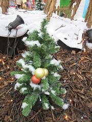 Little Christmas tree in George Yard IMG_9738 (tomylees) Tags: november wednesday essex 26th braintree 2014