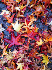 Leaves  -  Foglie (Dei's Light) Tags: red fall rain yellow leaf sidewalk giallo foglia autunno rosso pioggia marciapiede