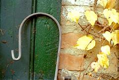(manni39) Tags: life film rural stillleben still m42 pentacon yashica lndlich yashicatlelectro m42mount pentacon50mm18 paradiesfilm