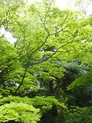 Belgium - Arboretum Kalmthout - Summer just began, brightness passed (G524_persoon2) Tags: green nature belgium belgi arboretum kalmthout