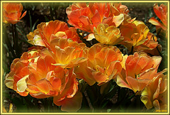 Cheerfulness (Irina Kiseleva) Tags: shadow red sun ny black flower color nature yellow brooklyn composition garden spring thebestofmimamorsgroups onlythebestofflickr