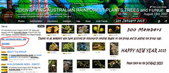 500 Members Ist January 2015 - IDENTIFYING AUSTRALIAN RAINFOREST PLANTS TREES and FUNGI - Flickr Group (Black Diamond Images) Tags: screenshot rainforest 500 rainforests australianflora australiannativeplants australianplants rainforestflora 500members rainforestplants rainforestplant australianrainforest arfp australianrainforests 112015 australianrainforestplants idrainforestgroupmilestones australianrainforestflora arfmilestone identifyingaustralianrainforestplantstreesandfungigroup idrainforestgroup rainforestidentification 500thmember