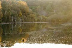 Sony a7 | DSC05304-2  (okazaki oro lake) (tea81p) Tags: lake reflection sony 55mm f18 a7  sonnar carlzeiss nex 7    alphaa7 ilce7 sel55f18z sonnartfe55mmf18za teaflphoto