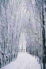 decembre 2008 villeneuve d ascq (9) (way of live) Tags: nord flandres lille hautdefrance campagne traditions geants