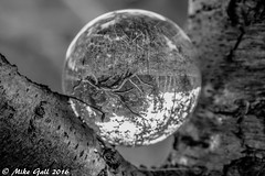 Woods 4 (crusha5050) Tags: woodland crystalball tree crystal ball reflection bokeh depthoffield greatfen holme