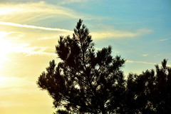 Tree and Sky (ericgrhs) Tags: sky tree nature silhouette clouds dusk himmel wolken baum