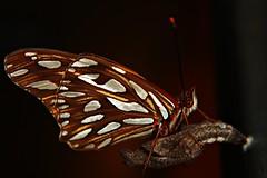Bienvenida (augustoarg78) Tags: naturaleza baby color nature bebe nacimiento collors