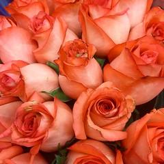 Una rosa es una rosa es... (NIKONIANO) Tags: flores rose flor mother rosa colores mayo bouquet rosas ramo mothersday zamora iphone gertrudestein díadelamadre ramoderosas nikoniano iphonephotography zamoramichoacán enmayo sergioalfaroromero iphone6 unarosaesunarosaes mésdemayo