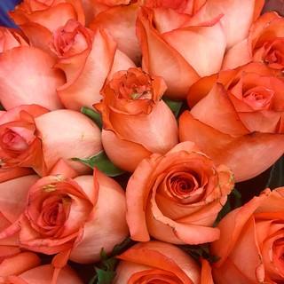 Una rosa es una rosa es...