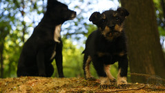 My dogs Industar 50-2 (M.Bubone) Tags: dogs sony alpha 50 700 35 industar 502  my