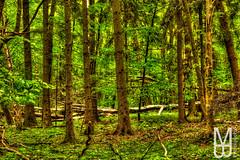 Welche Geschichten,Mythen und Sagen knnten uns diese Bume erzhlen wenn sie sprechen knnten?  What stories , myths and legends could tell us these trees if they could speak ?  #hainich #nationalpark #nationalparkhainich #thringen #deutschland #thuring (mb.photography.thueringen) Tags: wood trees tree green love nature beautiful canon germany deutschland eos thringen nationalpark thuringia loveit dslr hdr facebook l4l followme likeme nationalparkhainich f4f hainich eos750d diewocheaufinstagram natureandmorebyangel