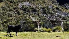 Reserva del Huascaran - Ancash (jimmynilton) Tags: peru del blanca cordillera vaca choza reserva ancash huascaran