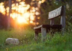 (Photographordie) Tags: trees light sunset luz nature forest pen bench atardecer natural bokeh 14 banco 85mm clam descanso tranquilidad mirrorless microfourthirds microcuatrotercios samyang85mm olympusepm2