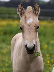 """No, I'm Not ET!"" (winkler.roger) Tags: horse animal filly foal americanquarterhorse domesticanimal"