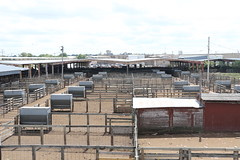Oklahoma National Stockyards, World's Largest Stocker and Feeded Cattle Market, Stockyards City, OK (Beltway Photos) Tags: oklahoma unitedstates okc oklahomacity oklahomacounty stockyardscity