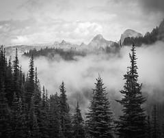 (D3IM0S) Tags: blackandwhite mountains landscape washington mountrainier spruce usnationalpark
