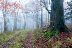 Misty Cotswolds Wood (jactoll) Tags: autumn light mist misty fog woodland landscape dawn woods nikon mood broadway foggy cotswolds worcestershire nikkor d610 woodlandmist 1635mmf4 jactoll nikonfxshowcase