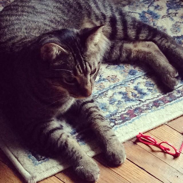 Amys big brother, Chewbacca. #catsitting