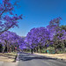 Pan street and Jacaranda Trees HDR Pretoria